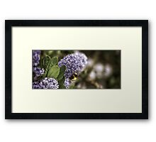 The Bumble Framed Print