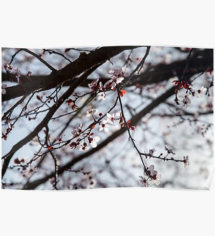 Lighted Blossoms Poster