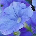 Blue Petunia Blossom by Sandra Foster