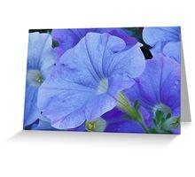 Blue Petunia Blossom Greeting Card