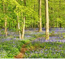 Blue forest in sunny day by skyfish