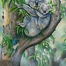 Koala Blue  by owen  pointon
