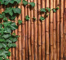 Bamboo Wall With Green Ivy by visualspectrum