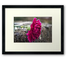 Pink - Coloured Framed Print