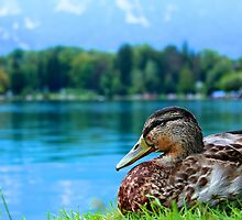Water off a duck's back by James Hanley