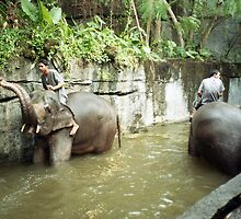 Bali zoo by barrymansfield