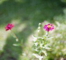 Bali flowers  by barrymansfield