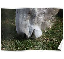 Donkey Food Poster
