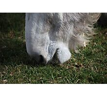 Donkey Food Photographic Print