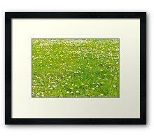 Green grass field Framed Print