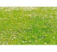 Green grass field Photographic Print
