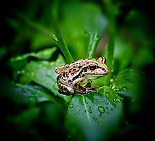 Frog by Greg and Margaret Buck
