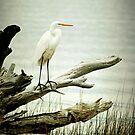 Egret on a Fallen Tree Cell Case by Jonicool