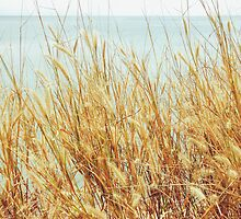 Golden Grass By The Sea by visualspectrum