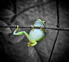 Swinging frog by Greg and Margaret Buck