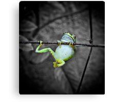 Swinging frog Canvas Print