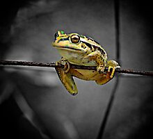 Frog on the wire by Greg and Margaret Buck