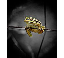 Frog on the wire Photographic Print