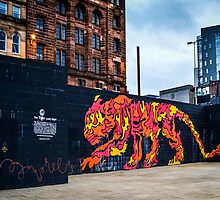 Painted Tiger by Stevie B