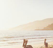 Three Pelicans On Malibu Beach by visualspectrum