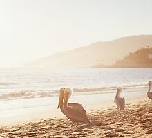 Pelicans On Malibu Beach by visualspectrum