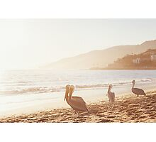 Pelicans On Malibu Beach Photographic Print