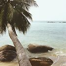 Palm Tree on Beach by visualspectrum