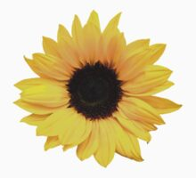 sunflower flower floral yellow brown by wasootch