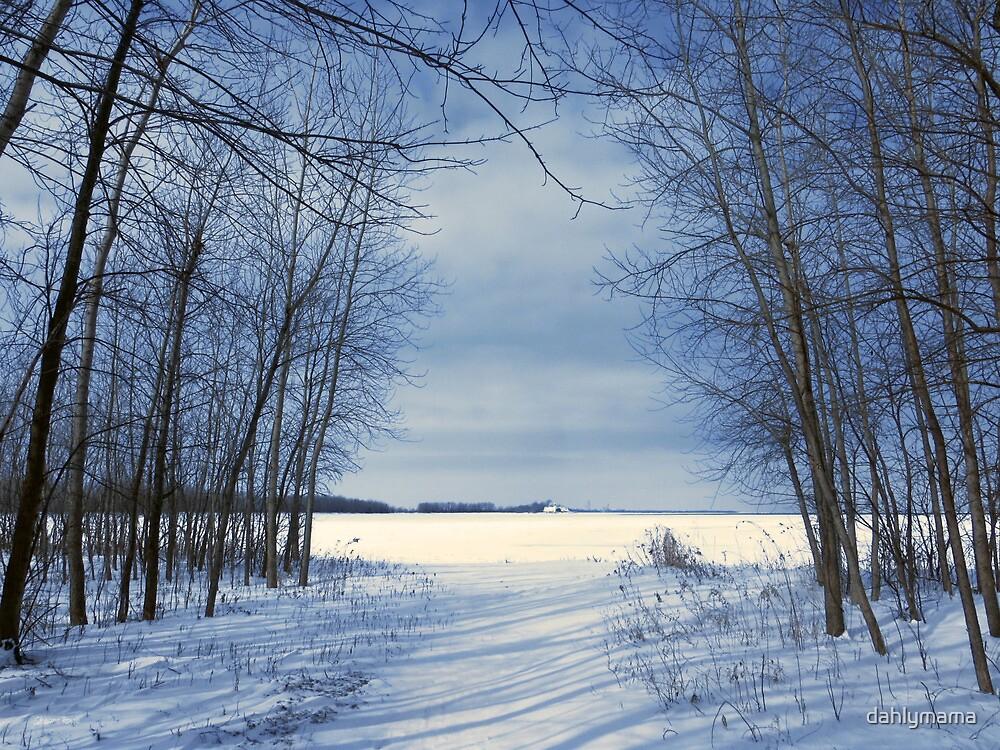 Wintertime At Sheldon Marsh by Shawna Rowe