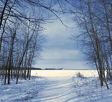 Wintertime At Sheldon Marsh by MSRowe Art and Design