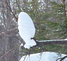 SNOW Owl? by MaeBelle