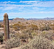Sonoran and the Single Saguaro by Lee Craig