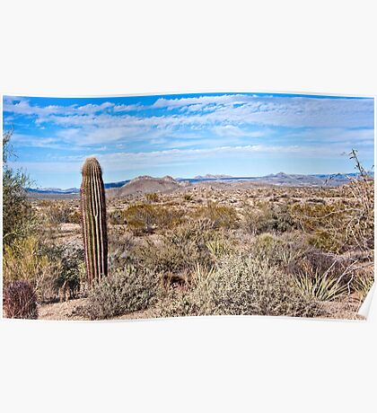 Sonoran and the Single Saguaro Poster