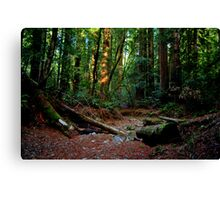 Armstrong Woods Canvas Print