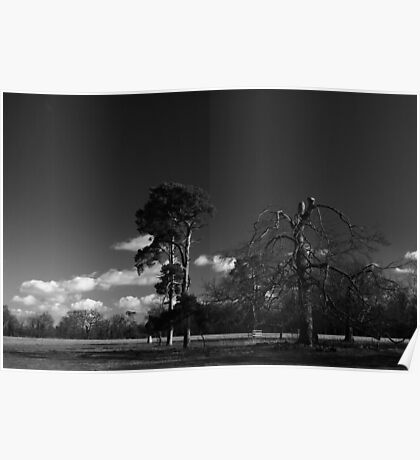 Lone Trees - Wandlebury, Cambridgeshire Poster
