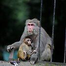 A nursing monkey in Manali by MichaelBr
