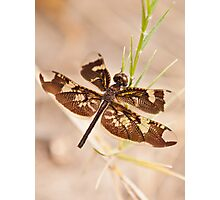 dragonfly insect photograph Photographic Print
