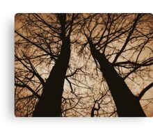 Looking up... Canvas Print