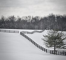 The Color of Winter BW by Mary Carol Story