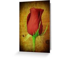 The Beauty of a rose Greeting Card