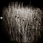{ reeds } by Lucia Fischer
