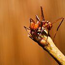 Leaf Cutter by Don Alexander Lumsden (Echo7)