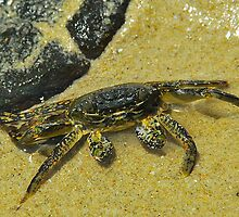 Clever Crab by peasticks