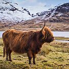 Highland Portrait by Don Alexander Lumsden (Echo7)