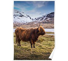 Highland Portrait Poster