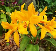 Canna Lily Yellow Flower Plant by artkrannie