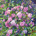 Wild Roses by Morgan Ralston