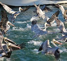 A Group Of Pelicans by Cynthia48
