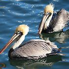 Two Beautiful Pelicans  by Cynthia48