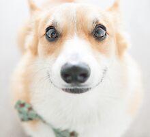 : Corgi Smiles : by kmkmonkay